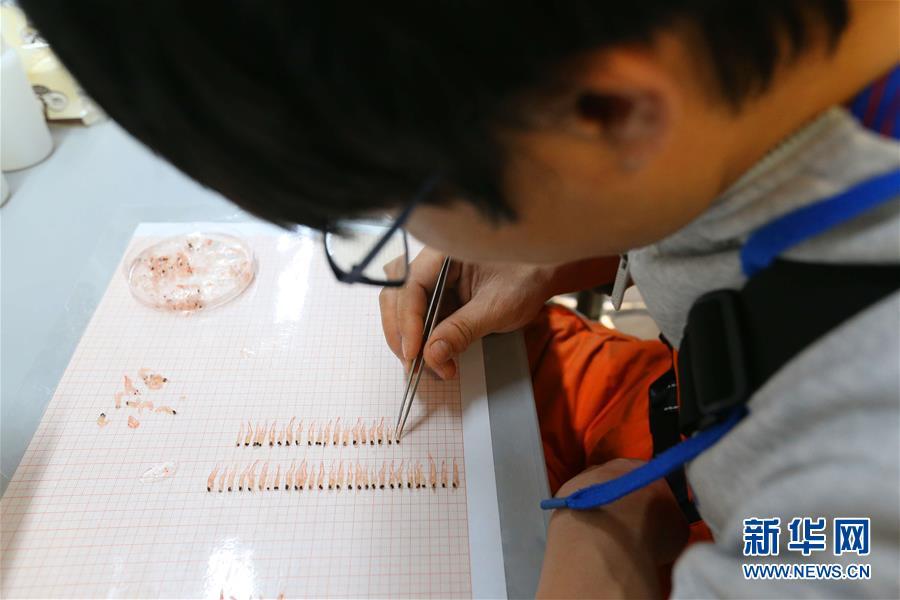 中国南极考察队完成宇航员海磷虾调查图2