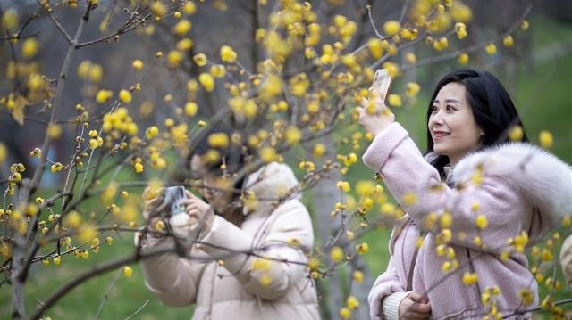 武汉东湖梅花节开幕