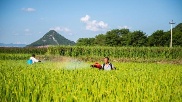 """中国农民丰收节丨在""""万年稻种""""发现地看金色秋收"""