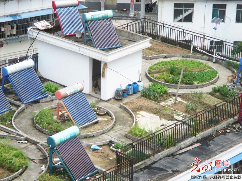 """居民楼顶种菜成""""空中菜园""""造型别致令人惊叹-社会"""